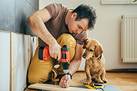 Man remodeling a room with a dog beside of him.